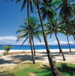 Coconut palms by the ocean.